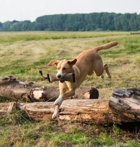 Hundeschule-Wieborg Apportierspaziergänge