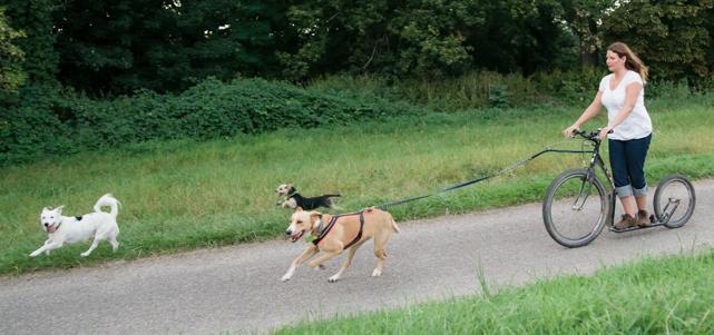 Hundeschule-Wieborg Beschäftigung