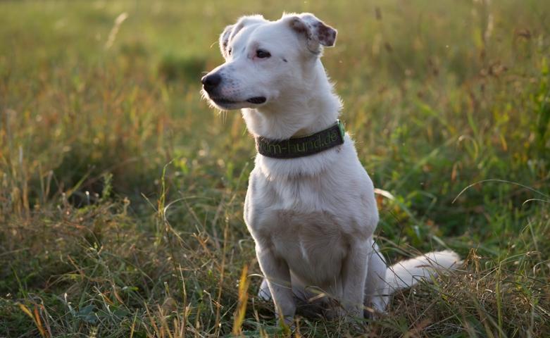 Hundeschule-Wieborg Erziehung