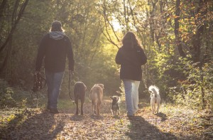 Hundeschule Wieborg Wanderungen 2