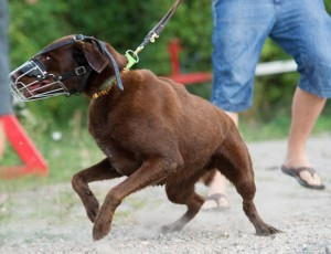 Hundeschule Wieborg Verhaltensberatung
