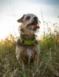 Hundeschule-Wieborg Kleine Hunde2