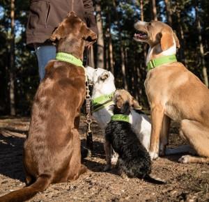Hundeschule Wieborg